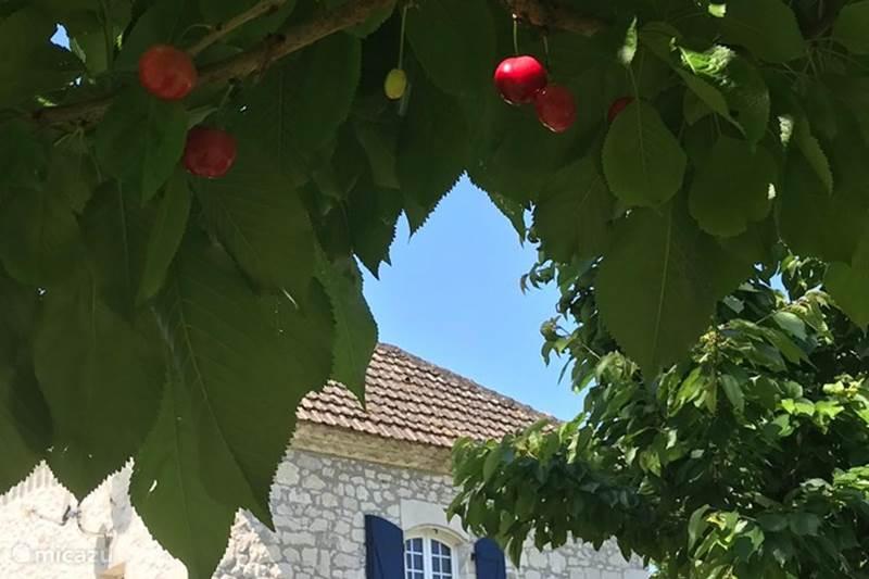 Vakantiehuis Frankrijk, Tarn-et-Garonne, Valeilles Gîte / Cottage Gite Le Bergerie