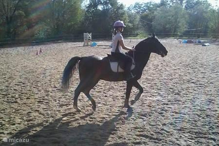 Paardrijden op 1800 m
