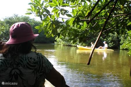 Kanoeën in de mangroves