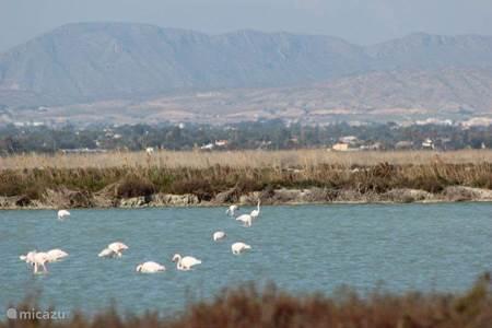 Flamingo´s in de Salinas van Santa Pola