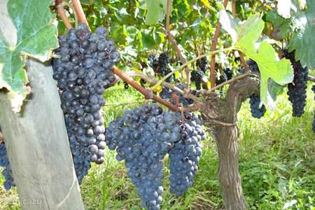 Cahors wijnen