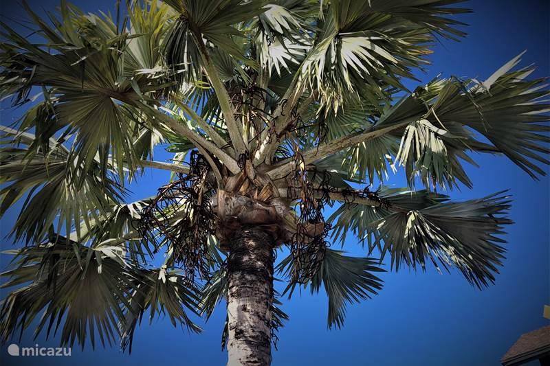 Ferienwohnung Aruba, Pos Chiquito, Pos Chiquito Appartement Palmhouse appartment 1
