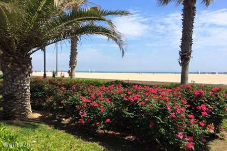 Vacation rental Spain, Costa Blanca, Villajoyosa (Benidorm) apartment Apartment on the beach of Paradis
