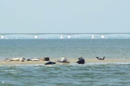 Zeehonden spotten
