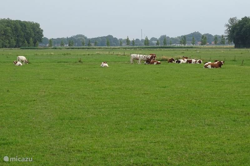 Vakantiehuis Nederland, Gelderland, Bruchem Molen De Bruchemse Molen