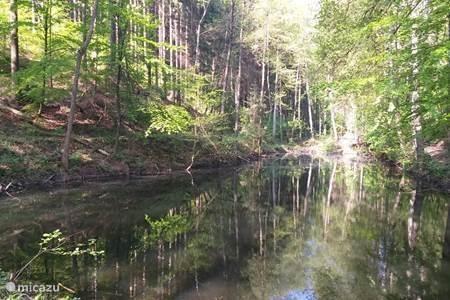 Wandelpad achter Hochwald
