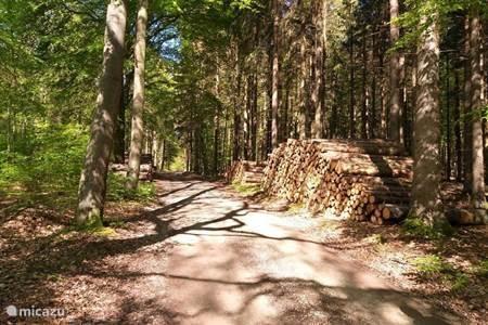 Bosweg naar Steina en Bad Lauterberg