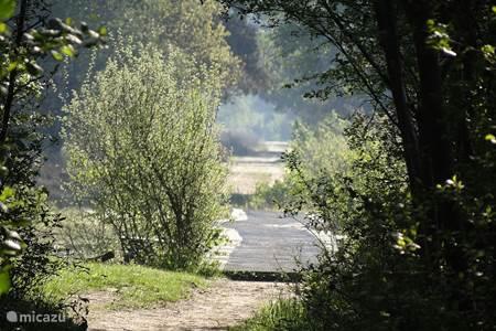Natuurgebied Buurserzand