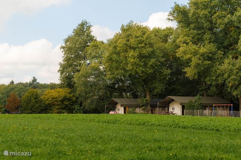 Vakantiehuis Nederland, Overijssel, Haaksbergen Glamping / Safaritent / Yurt Landrijk de Reesprong - Safaritent 1
