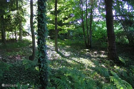 het bos Troncais 10.000 ha groot