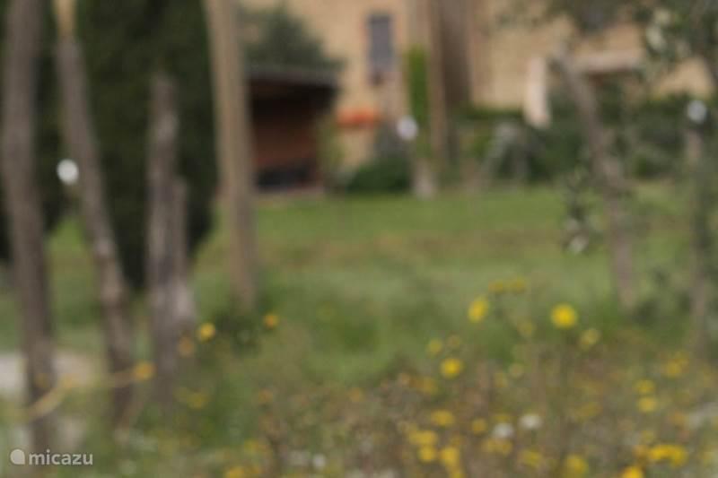 Vakantiehuis Italië, Toscane, Lajatico Appartement Casa Antonio