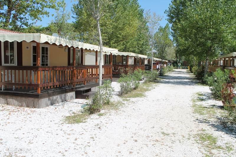 Vakantiehuis Italië, Toscane, Viareggio Stacaravan Mobile home ZA5 Type Large Viareggio