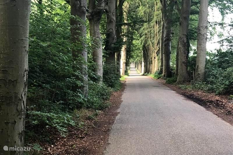 Vakantiehuis Nederland, Friesland, Oudemirdum Vakantiehuis Boshuisje