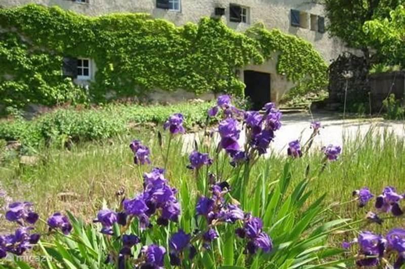Vakantiehuis Frankrijk, Gard, Molières-sur-Cèze Appartement  Het Auditorium