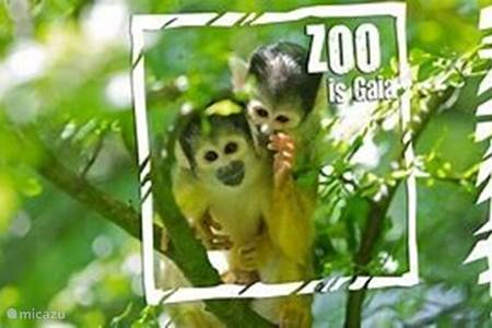 Gaia Zoo / dierentuin