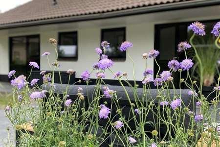 Vakantiehuis Nederland, Veluwe, Lieren bungalow Bungalow
