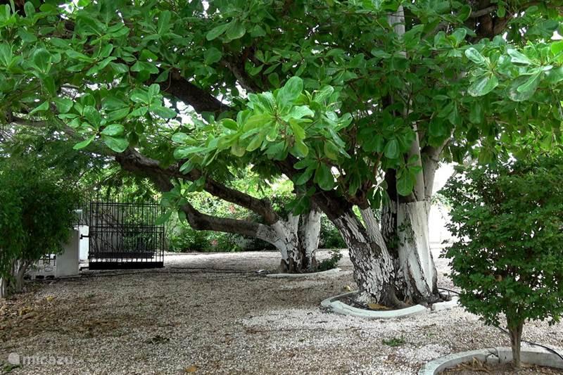 Vacation rental Curaçao, Curacao-Middle, Willemstad Villa Casa Anasa