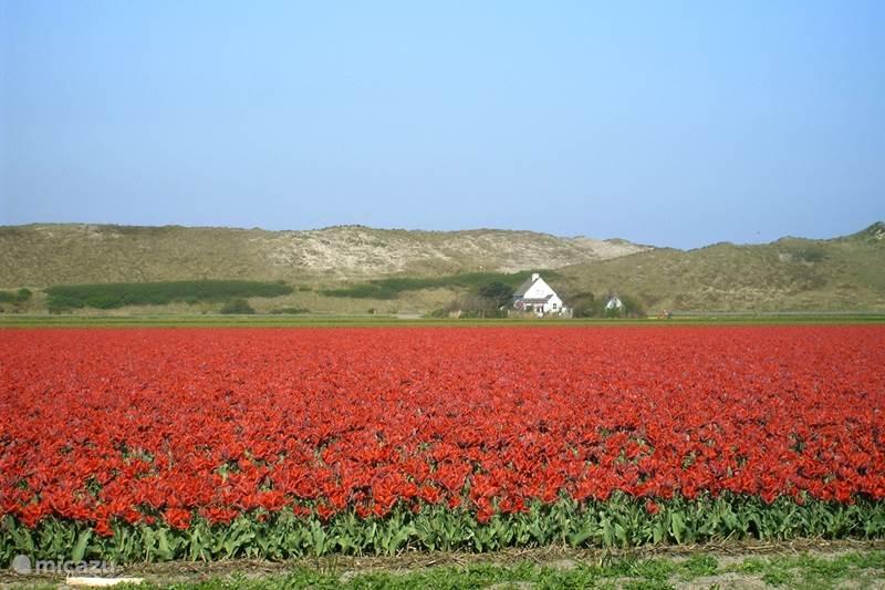 Vakantiehuis Nederland, Noord-Holland, Julianadorp aan Zee Villa Villa Tulp & Duin