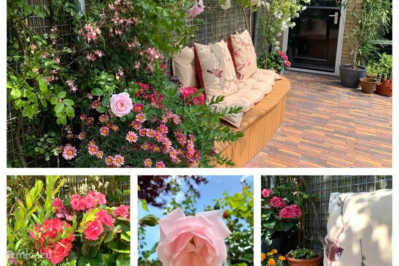 Vakantiehuis Nederland, Noord-Holland, Heiloo Vakantiehuis Dream House Heiloo