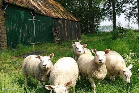 Vakantiehuis Nederland, Zeeland, Zuidzande – boerderij Hof den Antwerpen