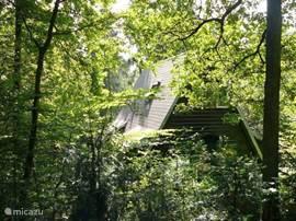 De bungalow aan de achterzijde vanuit het bos
