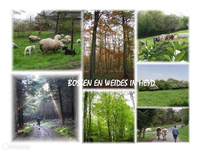 bossen en weides van Heyd