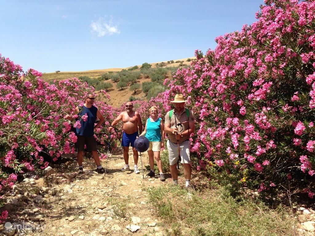 wandeling in de rivierbedding in de onmiddellijke omgeving: oleanders in bloei