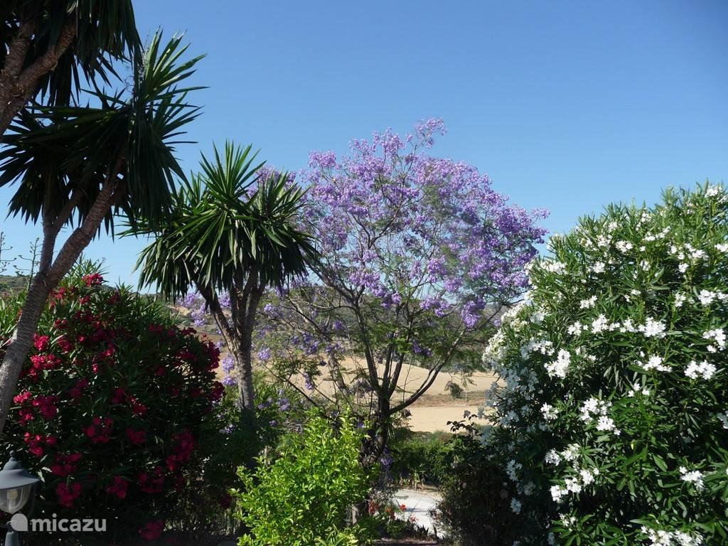 tuin in juni: zicht vanop zwembadterras