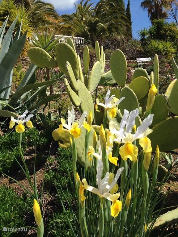 tuin in maart: irissen