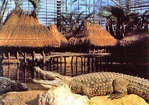 Area attractions: Crocodile Farm in Pierrelatte