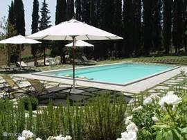 Zwembad 14x6 meter, diepte 150 cm. Gescheiden kindergedeelte 50 cm diep. Rondom is het terras met veel ligstoelen en parasols