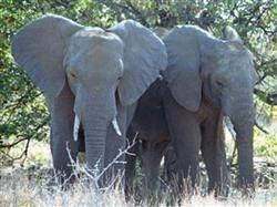 safari Elephantplains