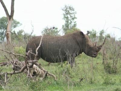 Tshukudu Safaris