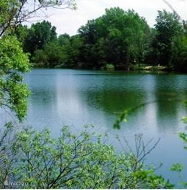 Fish and lake behind the park