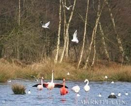 Natuur reservaat Zwillbrock net over de grens op ca 6 km. waar u de flamingo's tussen April en September kunt bewonderen.