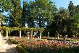 Rozentuim met uitzicht op grote terras overdekt met pergola vol roosjes