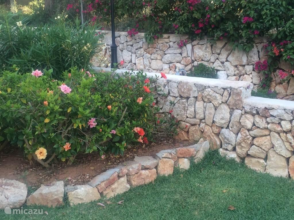 Prachtige bloemen in de tuin