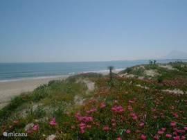 Dit fijn zandstrand op 600 meter! Het strand loopt geleidelijk af in de zee en is daardoor geschikt voor kinderen.