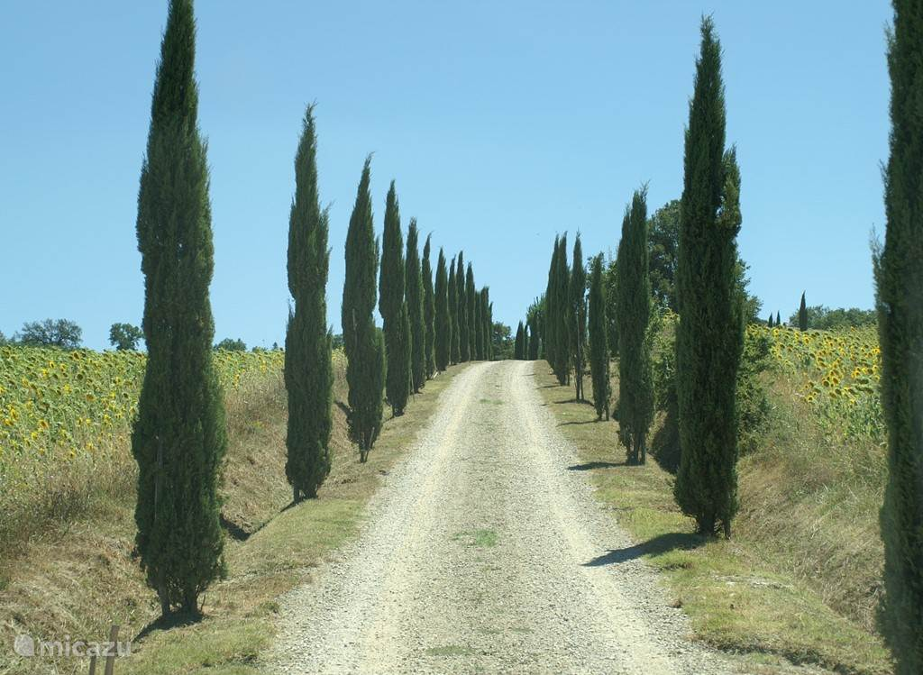 oprijlaan met cipressen waar uw vakantiegevoel direct begint