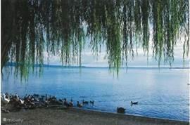 Lago di Bolsena op 18km