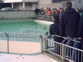 zeehondjes te Ecomare