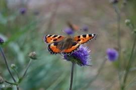 Eén van de vele vlinders.
