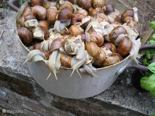 Escargots, a dish