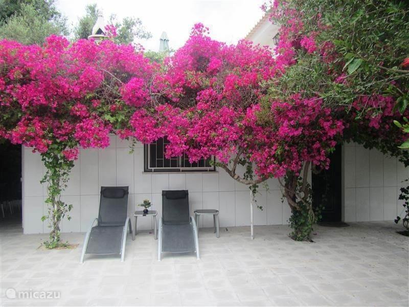 Vakantiehuis Portugal, Algarve, Moncarapacho vakantiehuis Quinta Botanica Marabout