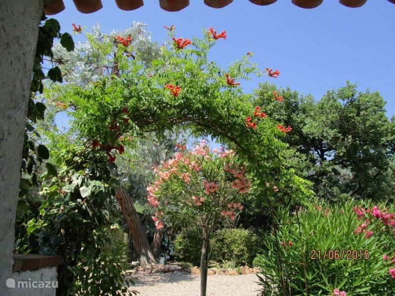 tuin voor terras bij villa