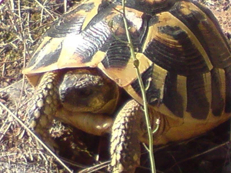 Een schildpad in het omringende natuur  gebied
