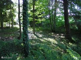 Eigen bos in de tuin