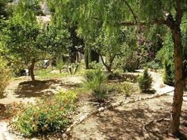 Deel van de volgroeide terrastuinen