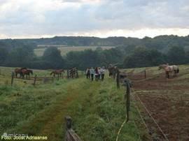 Paarden van het land halen voor de buitenrit.