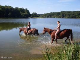 Zwemmen met de paarden voor ver gevorderde ruiters bij Étang de Pirot.